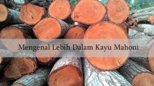 karakteristik kayu mahoni