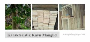 kayu manglid