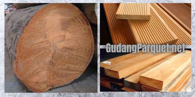 wujud kayu bengkirai
